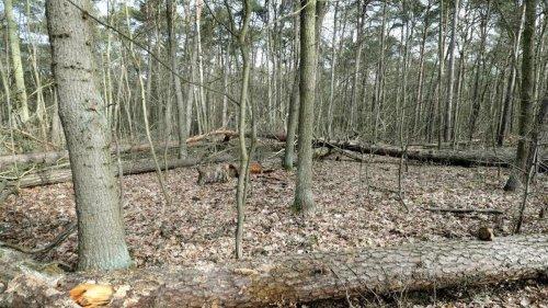 Umwelt: Mehr Totholz und besserer Schutz alter Bäume im Auwald