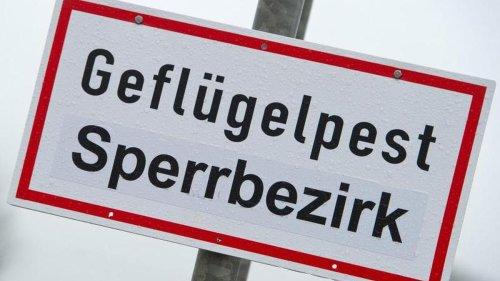 Geflügelpest: Virus diesmal offenbar aggressiver
