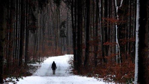 Forstwirtschaft: Zehn Millionen neue Bäume in Bayerns Wäldern gepflanzt