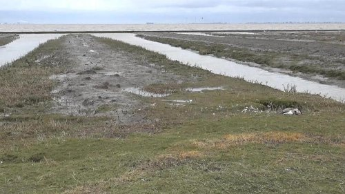 Geflügelpest: Hunderte tote Wildvögel im Kreis Leer entdeckt
