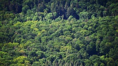 Wälder im Südwesten lechzen nach Wasser