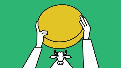 Käse selber machen: Wie es wirklich ist