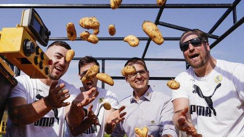 Handballer läuten Erntestart bei Frühkartoffeln ein