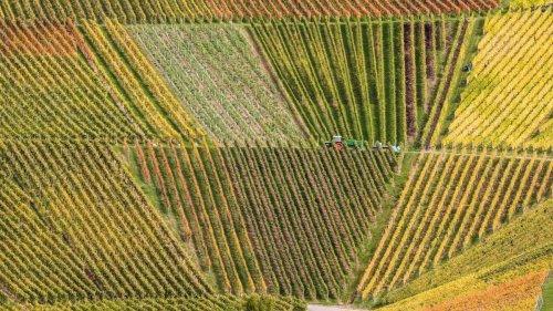 Agrar: Weinanbaugebiete im Südwesten werden immer größer