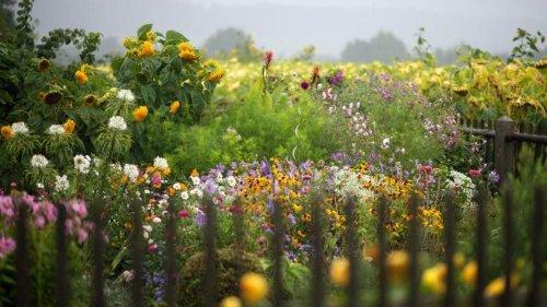 Kompromisse sind möglich: Plädoyer für mehr Unordnung im Garten