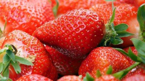 Agrar: Bessere Spargelernte in Brandenburg, Erdbeeren weniger gut