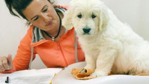 Hunde im Lockdown gefragt - Züchter und Verbände besorgt
