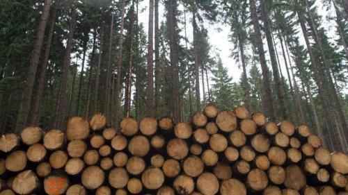 Viel Schadholz lässt Holzeinschlag in Thüringen steigen