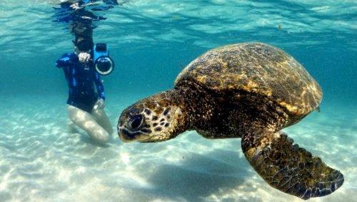 VIDEO: Shelly-Vision: Diver's Enchanting Ocean Footage Of Endangered Green Turtle - Zenger News