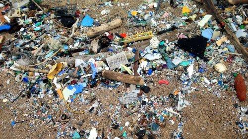 Microplastics Contaminating Food And Water Around The World - Zenger News
