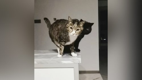 VIDEO: Are Mew Copying Me? Black Cat Plays At Being His Tabby Pal's Shadow - Zenger News
