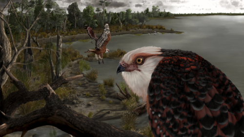 Agile Ancient Eagle Ruled The Roost 25 Million Years Ago - Zenger News