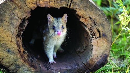 Six Eastern Australian Habitats Crucial To Prevent Species Extinction: Report - Zenger News