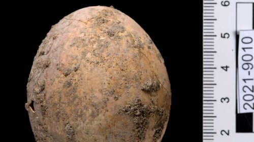 Hencredible Find: Archeologists Discover Undamaged 1,000-Year-Old Chicken Egg - Zenger News