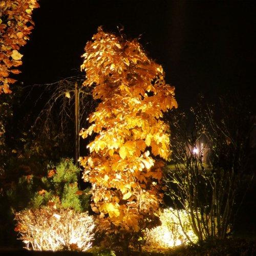 Schöner Garten im Herbst: 5 Tipps