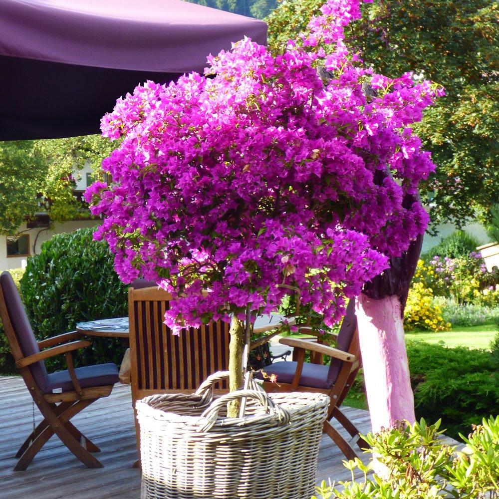 Balcony Gardening - cover