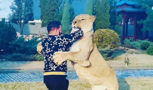 """Домашняя """"кошечка"""": харьковский депутат задекларировал льва вместо миллионов"""