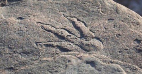 """""""Папа, смотри - след"""": 4-летняя девочка случайно открыла динозавров возрастом 220 миллионов лет"""