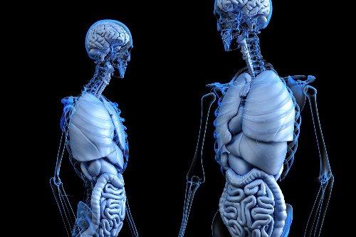 Futuro Del Trasplante De órganos: ¿Serán En Base A La Impresión En 3D? - ZURIRED NEWS